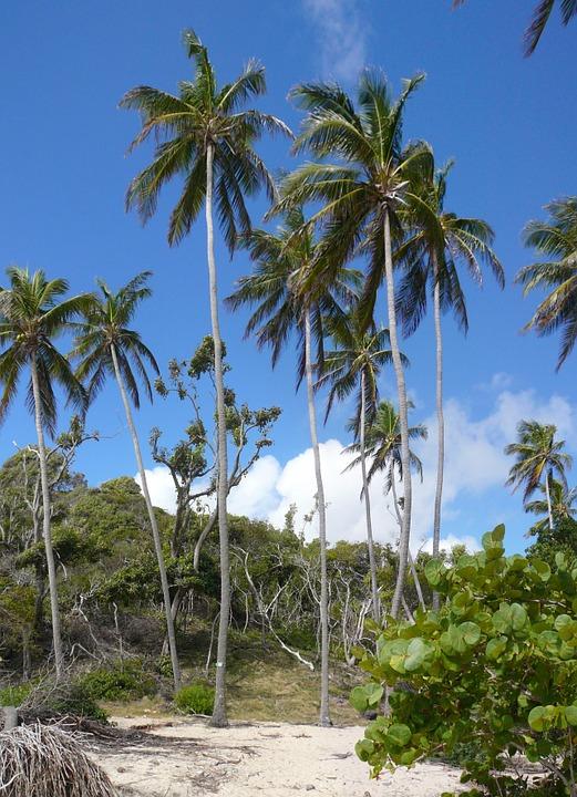 plage des Antilles